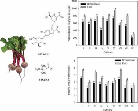 Betalain and Betaine Composition of Greenhouse- or Field-Produced Beetroot (Beta vulgaris L.) and Inhibition of HepG2 Cell Proliferation | plant cell genetics | Scoop.it