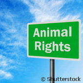 Commission européenne : CORDIS : Actualités : NOTOX: Travailler pour un futur sans expérimentations animales | ETHIQUE ANIMALE | Scoop.it