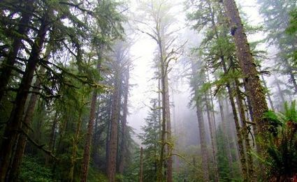 Oregon considers selling entire forest to benefit schools | Timberland Investment | Scoop.it