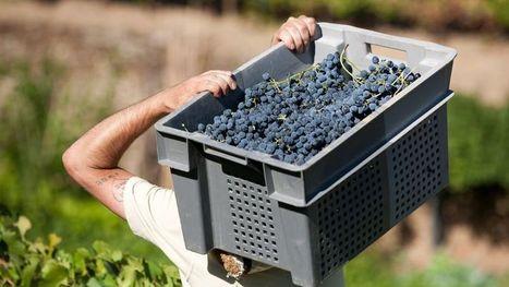 La Chine ambitionne de devenir le premier vignoble au monde d'ici cinq ans | Chine & Intelligence économique | Scoop.it