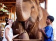 The World's Most Expensive Coffee Is Made With Elephant Dung | Xposing e-commerce, fashion & unique items. | Scoop.it