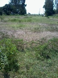 west kenya real estate:1.5ha parcel of land for sale in Molem-Bouye area - | Current news across the globe | Scoop.it