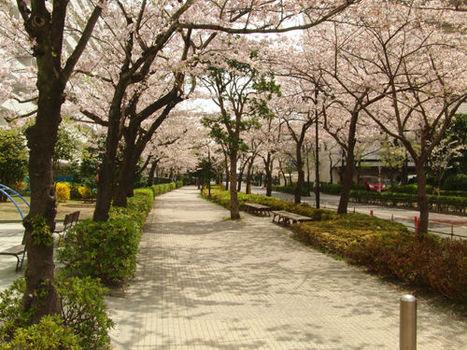 Nagisa Newtown | Blog, Un gars à Edogawa | Japon : séisme, tsunami & conséquences | Scoop.it