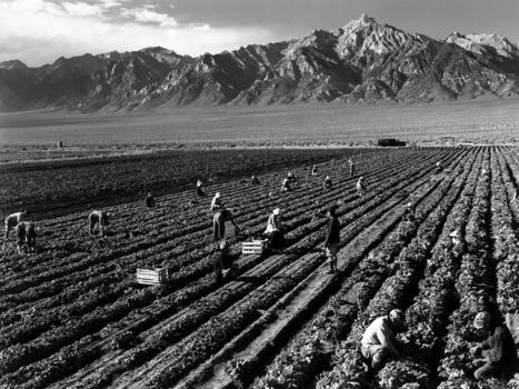 L'histoire oubliée des camps japonais en Californie | Sociétés & Environnements | Scoop.it