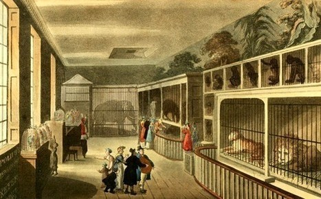 Swiss Cheese: Ethical Holes in Historical Zookeeping. | Animals in Captivity | Scoop.it