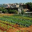 Urban agriculture in Brazil's favelas | Behavioral Economics | Scoop.it