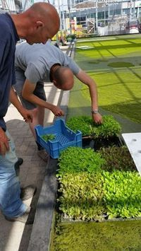 Farm Projects by Youmanitas | Aquaponics Fish Farming by Youmanitas | Scoop.it