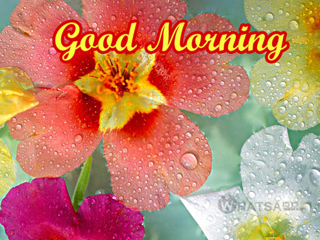 Good Morning Rain Images for Whatsapp - Whatsapp Images   Google Penalty on Virool - SEO Spam Penalty - Buy, Sell Links   Scoop.it