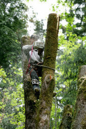 Blake's Tree Service is the company to call in Signal Mountain TN | Blake's Tree Service | Scoop.it