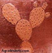 Opuntia Agrodesierto | TUNA  Y  NOPAL | Scoop.it