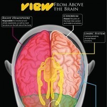 The Brain: A User's Guide to Emotions | Visual.ly | Content Creation, Curation, Management | Scoop.it