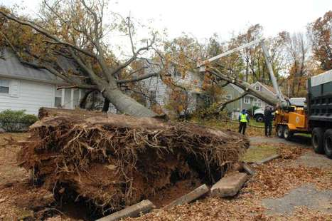 In post-Sandy North Jersey, trees remain a serious concern - NorthJersey.com | Urban forestry | Scoop.it