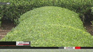 [Eng] Du césium au-delà de la limite dans du thé de Chiba et Saitama | NHK WORLD English (+vidéo) | Japon : séisme, tsunami & conséquences | Scoop.it