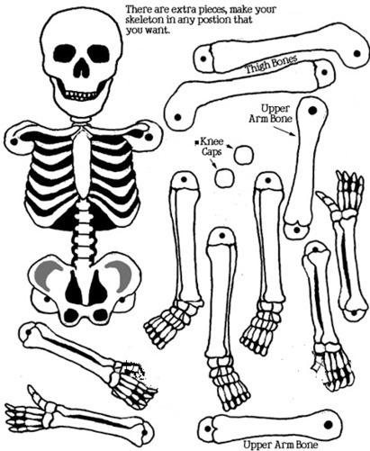 Esqueletos para montar con los niños   E...