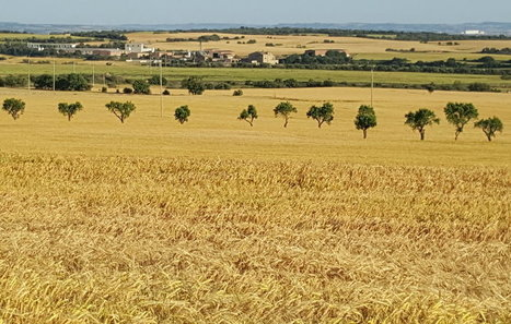 Agricultura no reconeix la singularitat al bosc segarrenc | #territori | Scoop.it