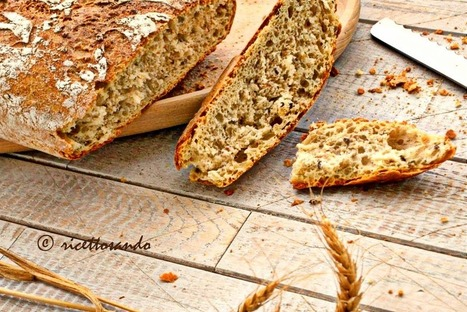 Ricettosando - ricette di cucina e chiacchiere: Pane integrale ai semi con lievito madre | Ricettosando | Scoop.it