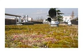Une toiture végétalisée fait l'électricité - Paperblog | Urbanisme vivant | Scoop.it