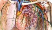 Mobiluck - Mobiiliopetusteknologia lukiolaisen arjessa: Anatomy Atlas 2 biologian opetuksessa | Opeskuuppi | Scoop.it