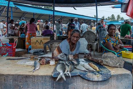 SRI LANKA: Sri Lanka, India ministerial level talks on fisheries issue on August 29   Hassan   Scoop.it