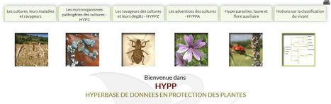 INRA : Hyperbase de données en Protection des Plantes (HYPP) | Insect Archive | Scoop.it