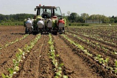 Cigarette électronique : qu'en pensent les producteurs de tabac ? | Agriculture en Dordogne | Scoop.it