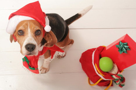 Christmas Gifts - An Expression of Love to Your Dog! | pets world | Scoop.it