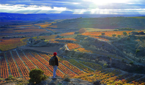 Wine Travel Destination 2013: Rioja, Spain | Food, wine and travel | Scoop.it
