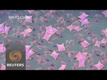 Stem Cells in Space | SynBioFromLeukipposInstitute | Scoop.it