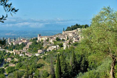In Umbria, an Italian Olive Oil Worth the Accolades | Todi&Umbria | Scoop.it