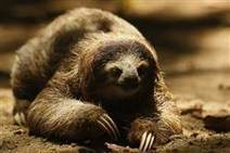 Most mammals won't flee climate change fast enough | Makamundo (Earthly) | Scoop.it