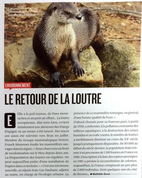 Rennes : le retour de la Loutre | L'environnement en Bretagne | Scoop.it