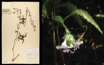 Herbaria are a major frontier for species discovery | Herbaria and research | Scoop.it