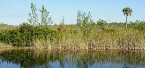 Everglades Water Quality Much Improved, Says SFWMD | Sunshine State News | The Everglades Puzzle | Scoop.it