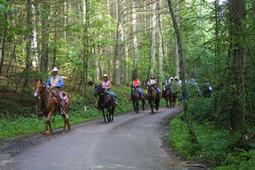 AQHA: Enroll in the Horseback Riding Program | Horse Sense | Scoop.it
