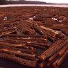Timberland Investment
