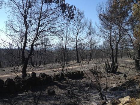 Incendi al Parc Natural del Foix i el Garraf | Planeta Tierra | Scoop.it