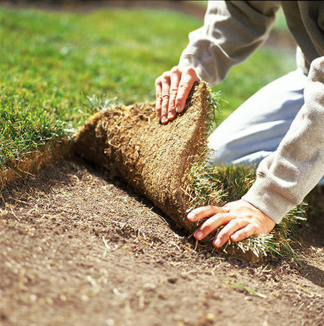 Choose the Right Grass for your Yard - Lowe's Creative Ideas | Gardening Tips 101 | Scoop.it