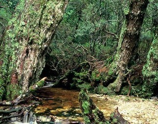 Save Ancient Forests and Wildlife Habitat | GarryRogers NatCon News | Scoop.it