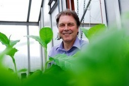 Faces of Plant Cell Biology: Prof Chris Hawes | Plantcellbiology.com | Plant Cell Biology | Scoop.it