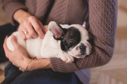 Why You Should Start a Career in Animal Care | Animal Bliss | Animal Welfare | Scoop.it