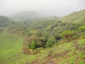Scandale écologique en Guinée-Bissau | Actualités Afrique de l'Ouest & Centrale | West & Central Africa news | Scoop.it