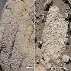 Could Life Have Evolved on Mars Before Earth?: Scientific American | FutureChronicles | Scoop.it