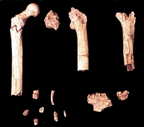 The Archaeology News Network: Human ancestor was less chimp-like than thought | The Related Researches & News of Dr John Ward | Scoop.it