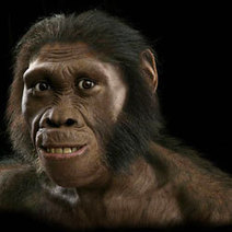 Half-Human, Half Ape Ancestor Walked Pigeon-Toed - Discovery News | EVOLUCION DEL HOMBRE | Scoop.it