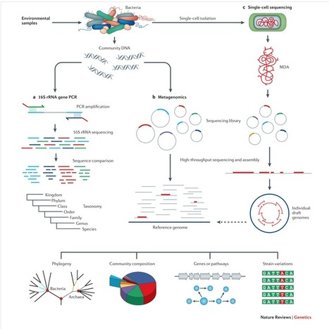 Recent advances in genomic DNA sequencing of microbial species from single cells | Single cell genomics and transcriptomics | Scoop.it