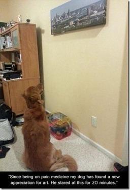 Dogs loves art | Funny Blaster | Scoop.it