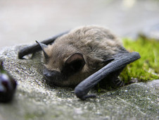 UK Ecologist: 'Wind Farms Driving Birds, Bats to Extinction' | Wind | ReWire | KCET | Organic Gardening, Farming, Lawncare, Landscaping & Eating :) | Scoop.it