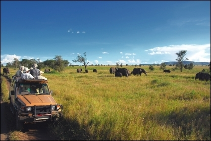 Seven Entrepreneurial Lessons Learned on the Serengeti | BUSINESS and more | Scoop.it