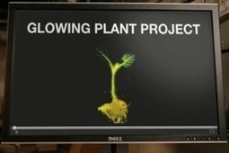 Kickstarter Campaign To Create Glowing Plant Goes Viral – Singularity Labs FTW! | Singularity-Pass (English) | Scoop.it