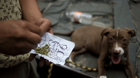 Will American Pot Farmers Put the Cartels out of Business? | Geography Education | Scoop.it